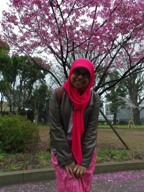 sakura berwarna pink di taman Ueno